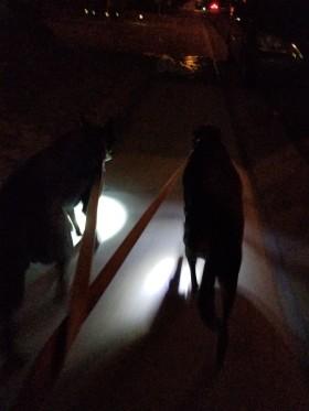 dogslamp.jpg